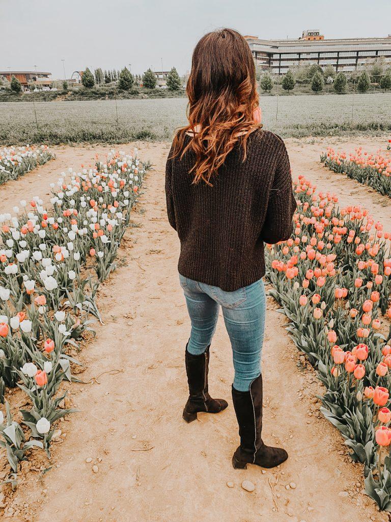 Campi di tulipani in Lombardia